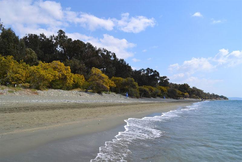Пляж в парке Дасуди / Dasoudi Beach