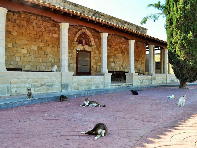 Кошки - полноправные обитатели монастыря Святого Николая